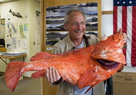 Record Rockfish