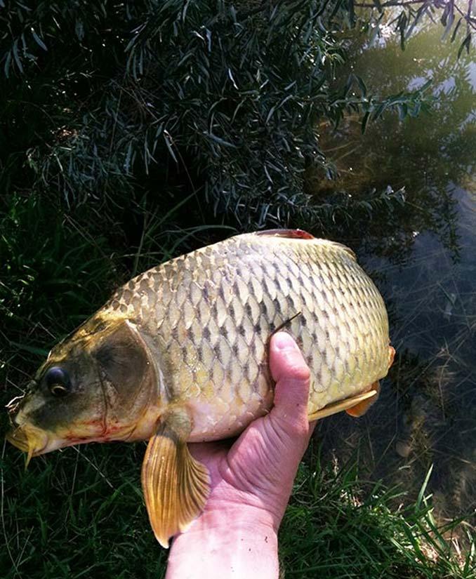 Carp Pond Fishing