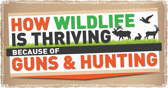 How Guns and Hunting have Helped Wildlife Thrive