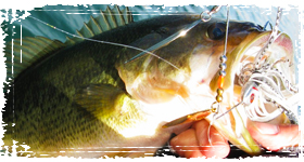 Wintertime Bass Fishing: Top lures for cold weather bass fishing