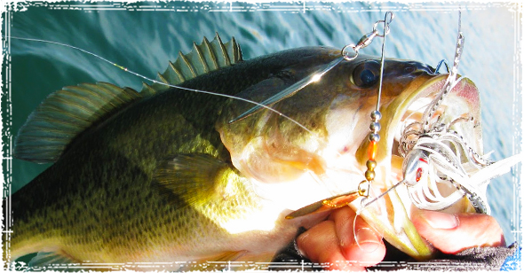 Bass Caught in Cold Water using a Spinnerbait