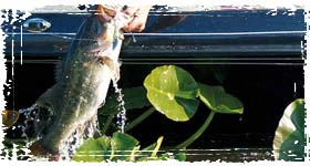 BASS Fishing: Pro Angler Techniques for catching Bass and becoming a better fisherman